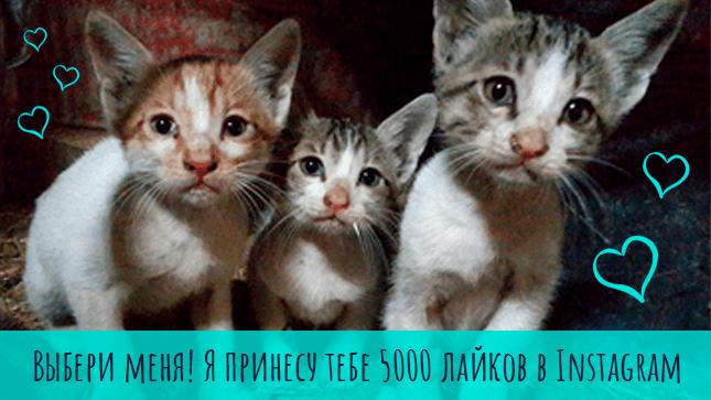 УТП от котиков: выбери меня