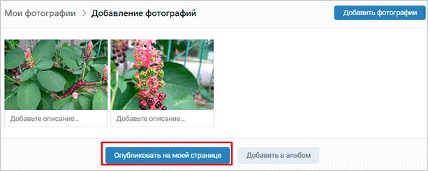 Как опубликовать снимки на странице