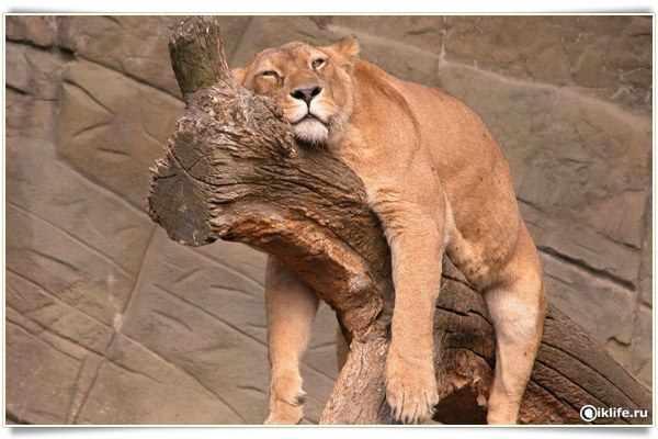 просыпаться усталым